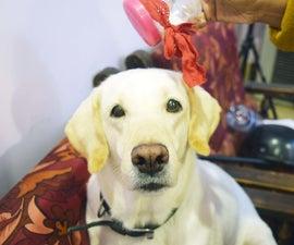 DIY Dog Dry Shampoo