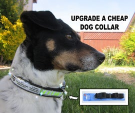 Upgrade A Dog Collar