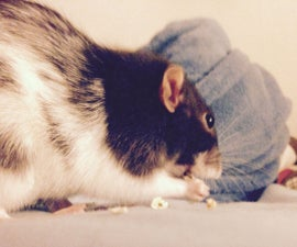 How To Train Your Rat and Other Rodents