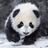 Pandabear62