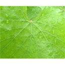 Magically attach a leaf back onto a tree!