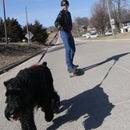 Skatejoring with dogs