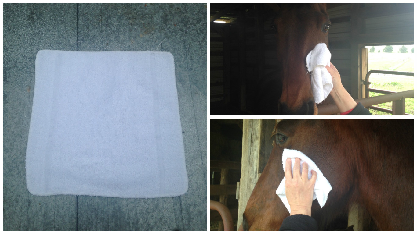 Picture of Use a Sponge or Washcloth to Clean Your Horse's Face