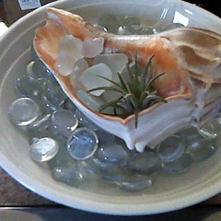 Seashell Planter