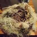 DIY Birds Nest