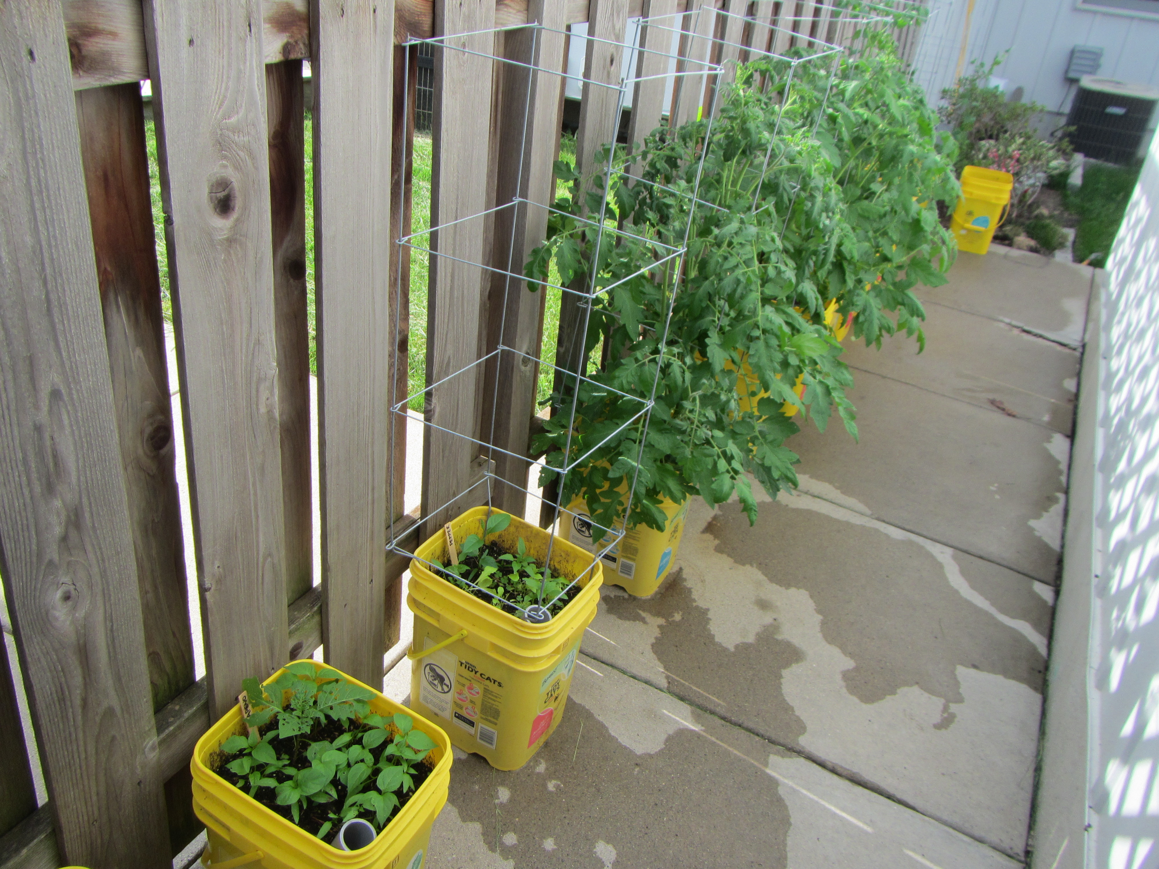 Picture of Self-watering Container Garden