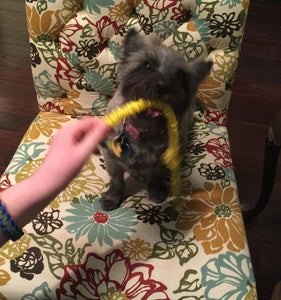 DIY Pet Chew Toy