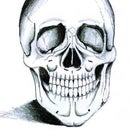 How to Draw a Skeleton Head