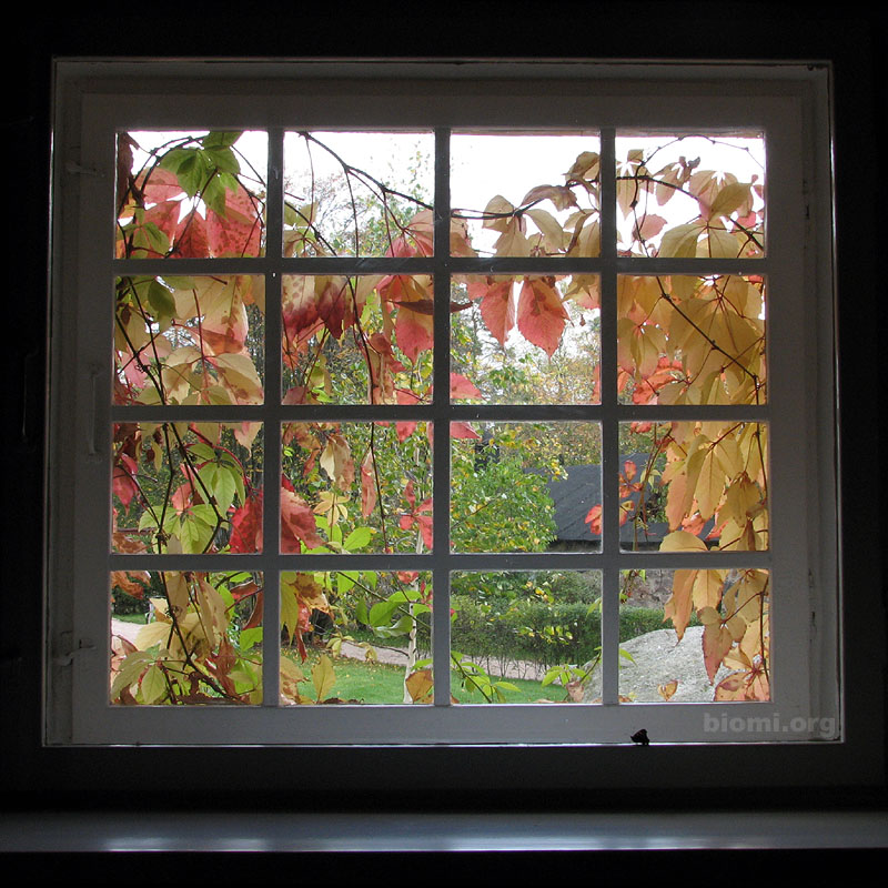 Picture of Insulate Your Windows