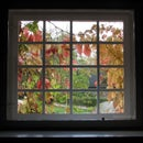 Insulate your windows