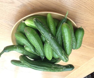 What to Do With Summer Cucumbers Surplus.