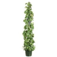 Potted Plant on Pole