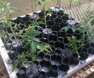 The Amazing Plant (Germination) Collar for Aquaponics and Hydroponics