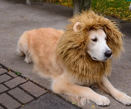 Lion Dog Costume