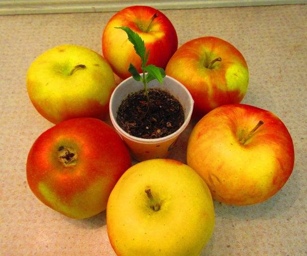 How to Grow Apple Trees