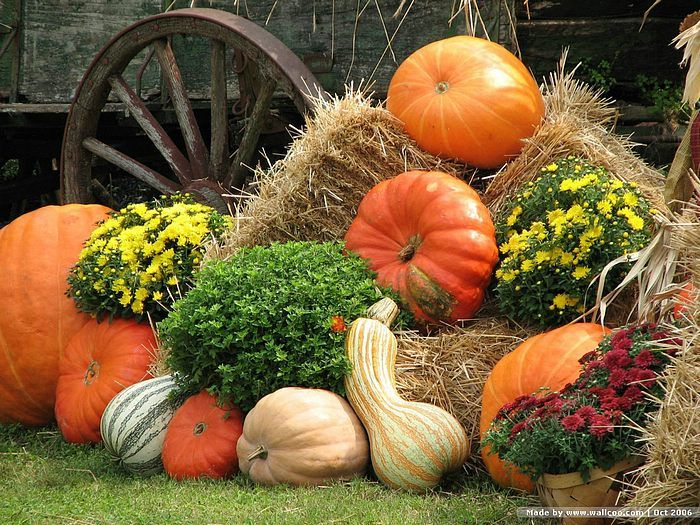 Picture of How to Create a Fall Outdoor Display