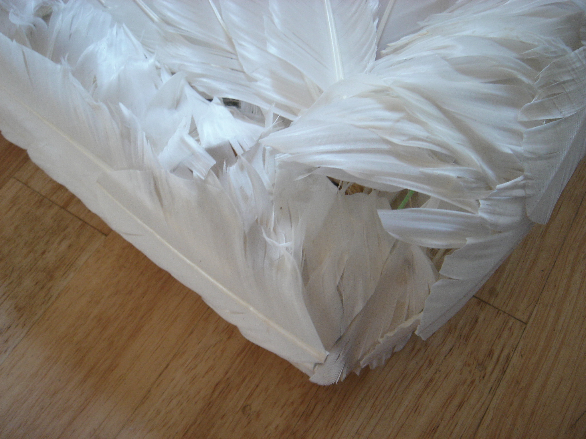Picture of Feathers 3