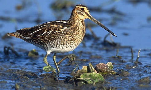 Gags: Snipe Hunting