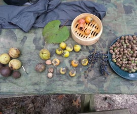 Processing Common Tree Foods: Acorns, Black Walnuts, Hickory Nuts, Persimmons
