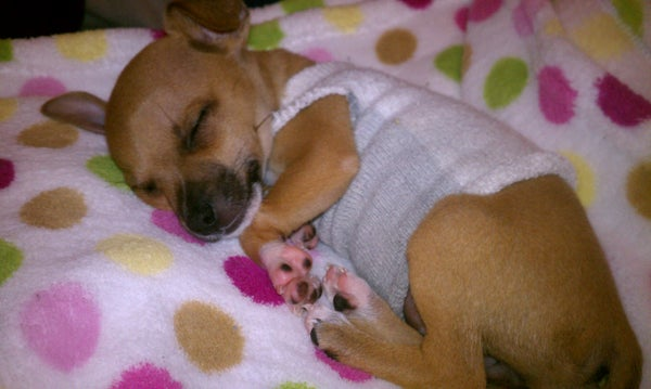 Puppy Sweater : Recycled Socks