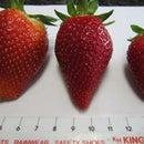 strawberry jam upgrade