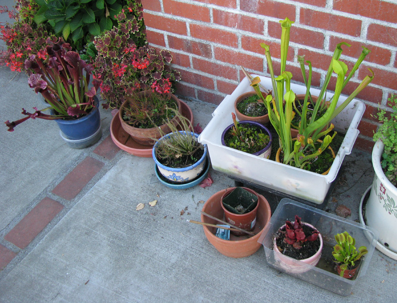 Picture of Carnivorous Plant Tray