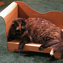 Simple, Cheap, Comfy home for cats