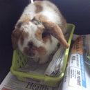 Rabbit Care Info