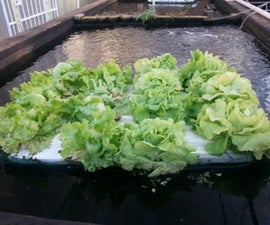 Floating Veggie Raft Continued