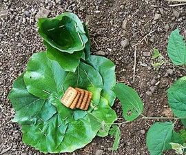 Leaves Vessel 100% Organic