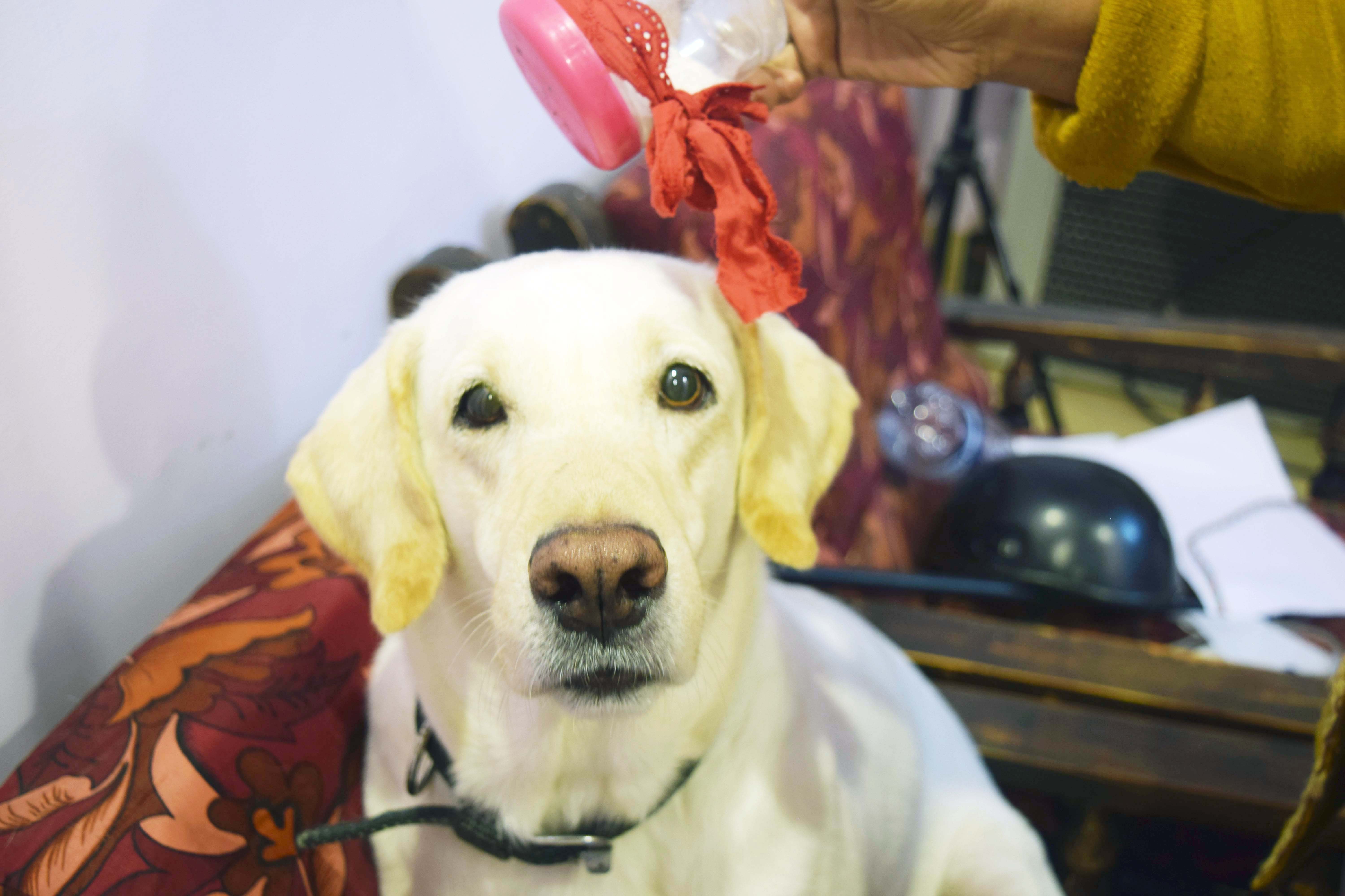 Picture of DIY Dog Dry Shampoo