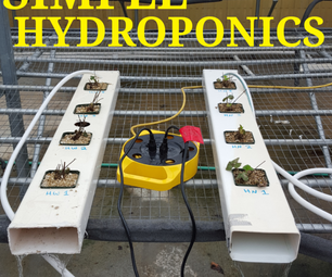 Simple Hydroponic Strawberries
