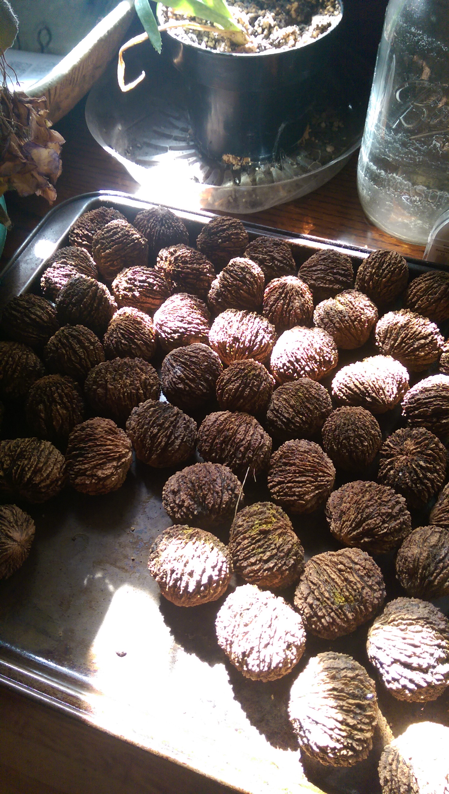 Picture of Set the Nuts Out to Dry
