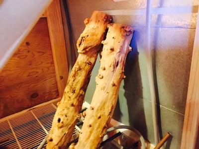 Prep the Driftwood