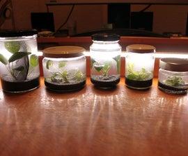 Pico Aquarium in a mason jar (almost maintenance-free)