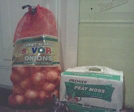 Storing Onions (Hopefully)