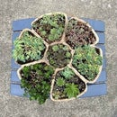Homemade Cement Succulent Planter