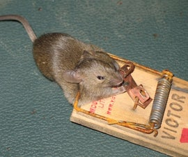 How to Trap a Mouse