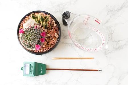 Understanding Watering Succulents and Cactus