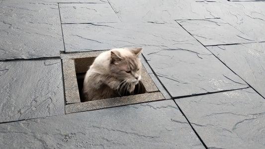 Underground Cat Tunnel