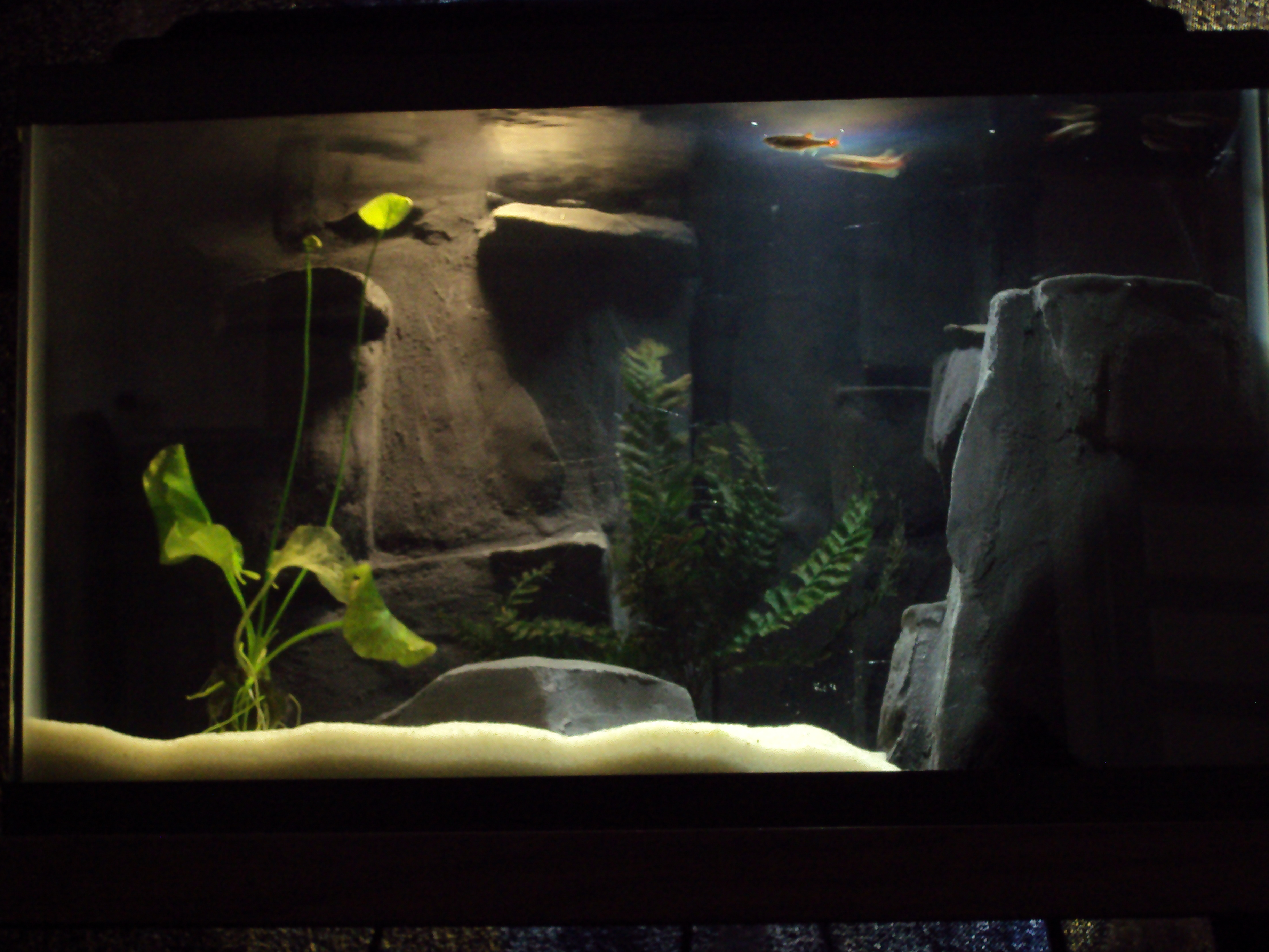 Фото заднего фона аквариума своими руками