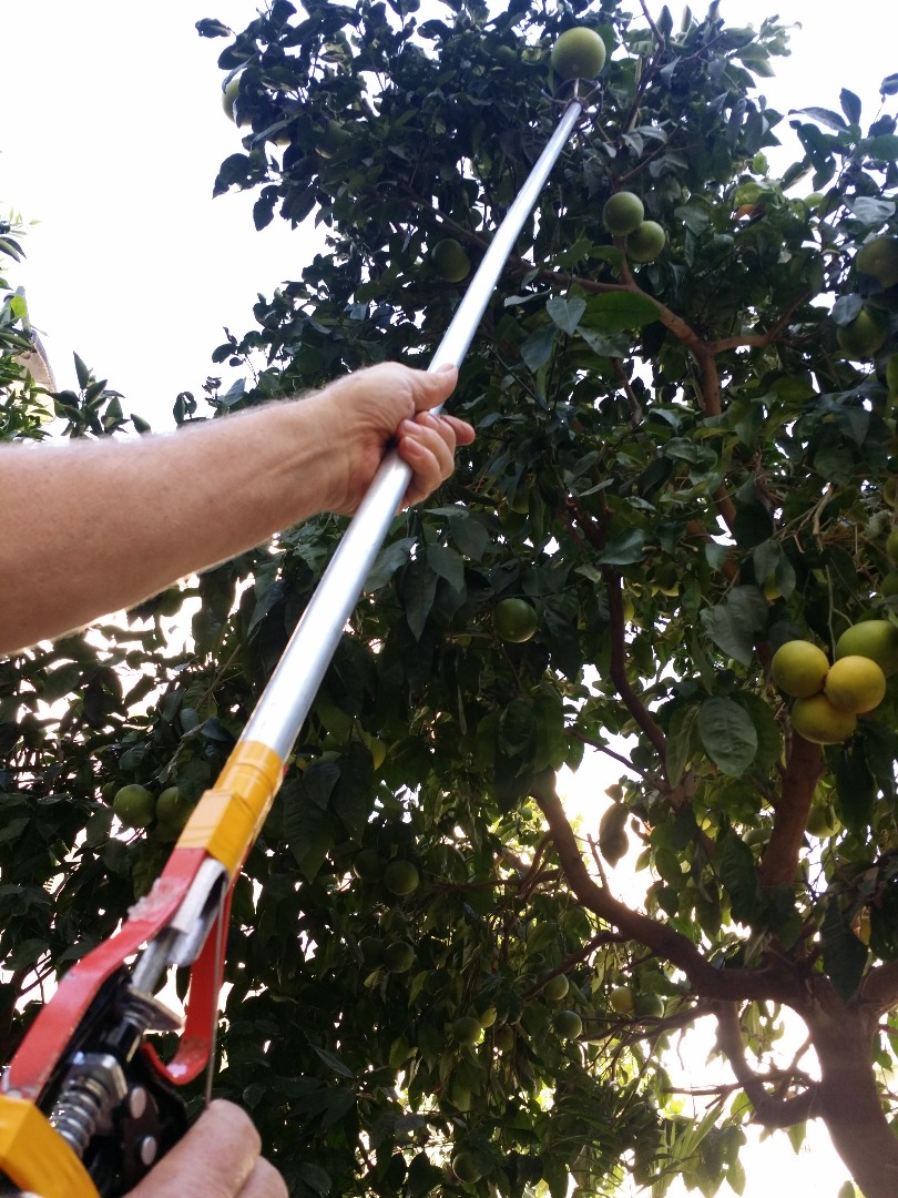 Picture of Fruit Grabber