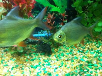 Introducing Fish