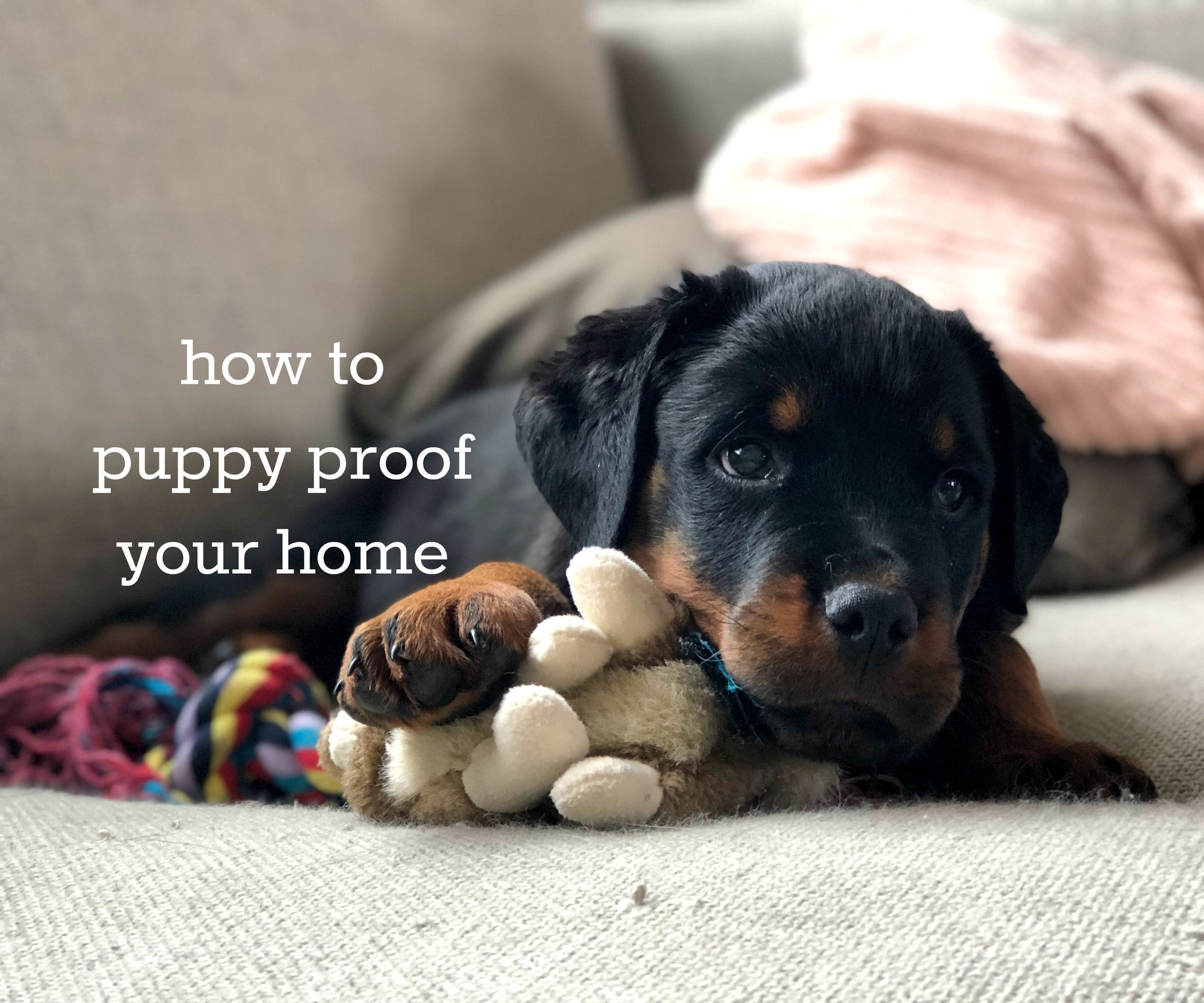 How to Puppy Proof Your Home : 7 Steps (with Pictures)