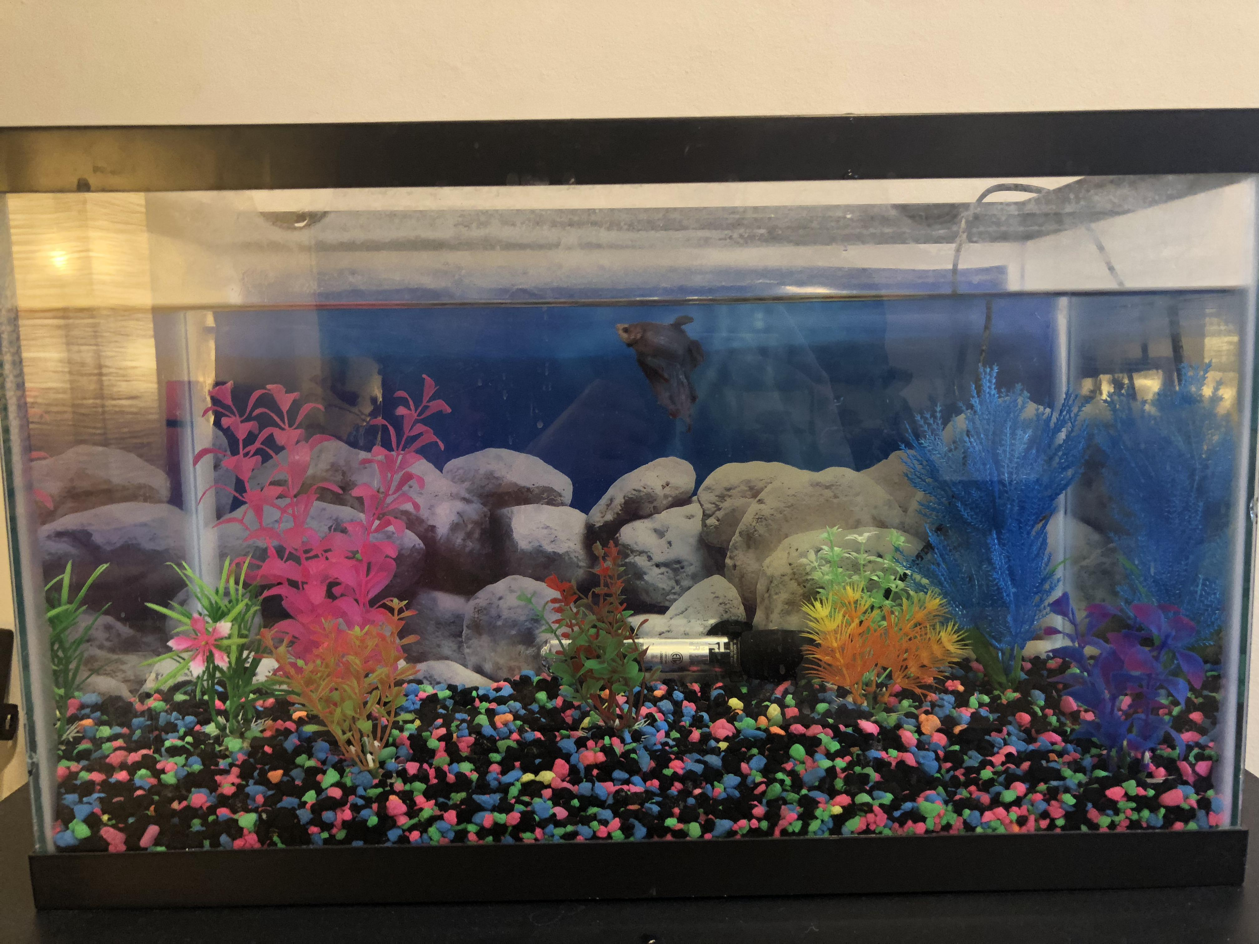 Picture of Cleaning and Preparing a Fish Tank