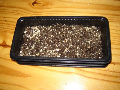Step 3: Prepare Growing Tray
