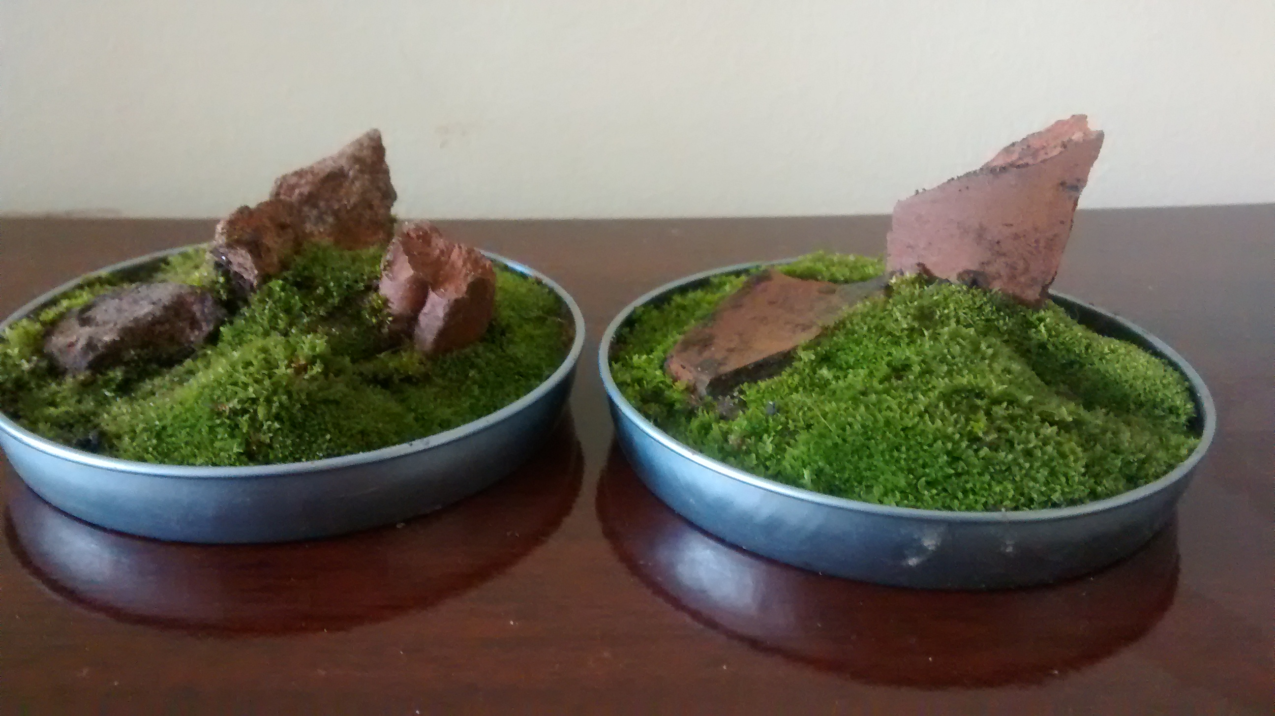 Picture of Find Plants and Make a Terrarium