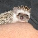 Simple Hedgehog Dig Box