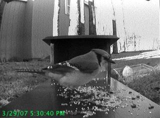 Picture of Wireless Bird Feeder Webcam