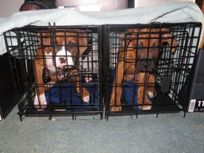 Getting the Puppies Into Their Cages
